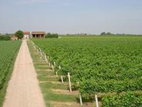 Azienda Agricola Ravaglia Grande